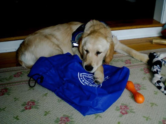 Isaiah the comfort dog is on the way to Boston.